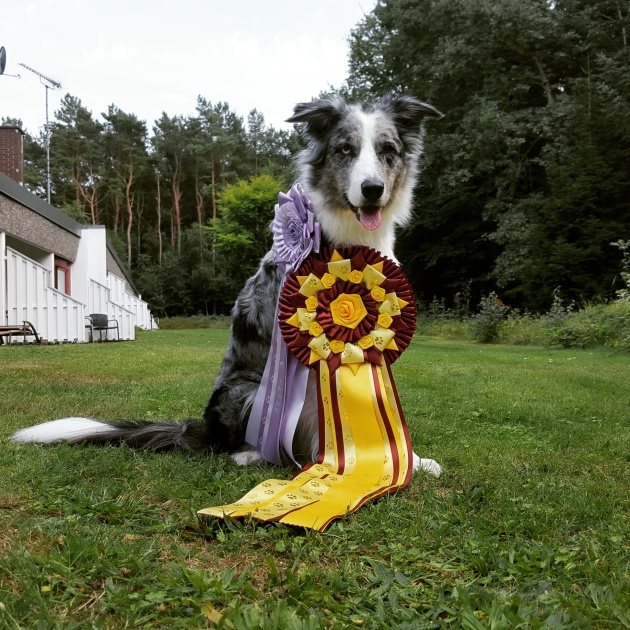 Kizz Me fik overrakt den store rossette for at blive tredje bedste rallychampionhund i DK i 15/16
